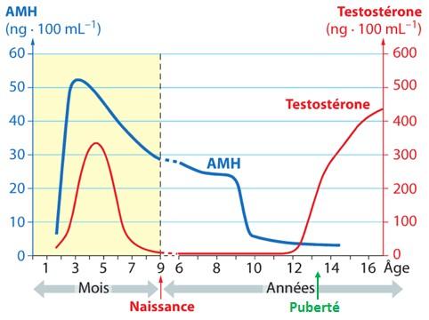 hormone anti mullerienne taux élevé