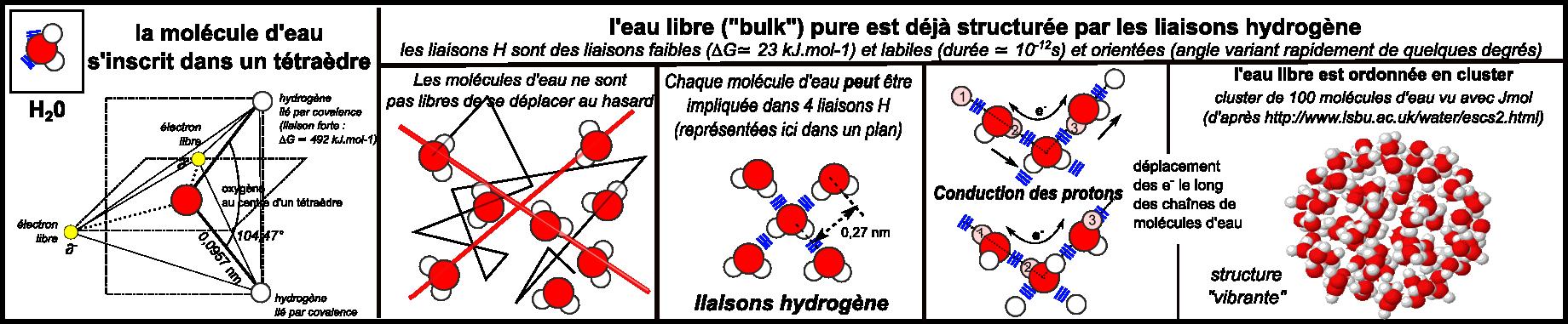 masse d une molecule d eau